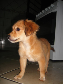 Cachorrinha femea